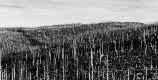 A controvérsia entre o termo de ajustamento de conduta e os crimes ambientais